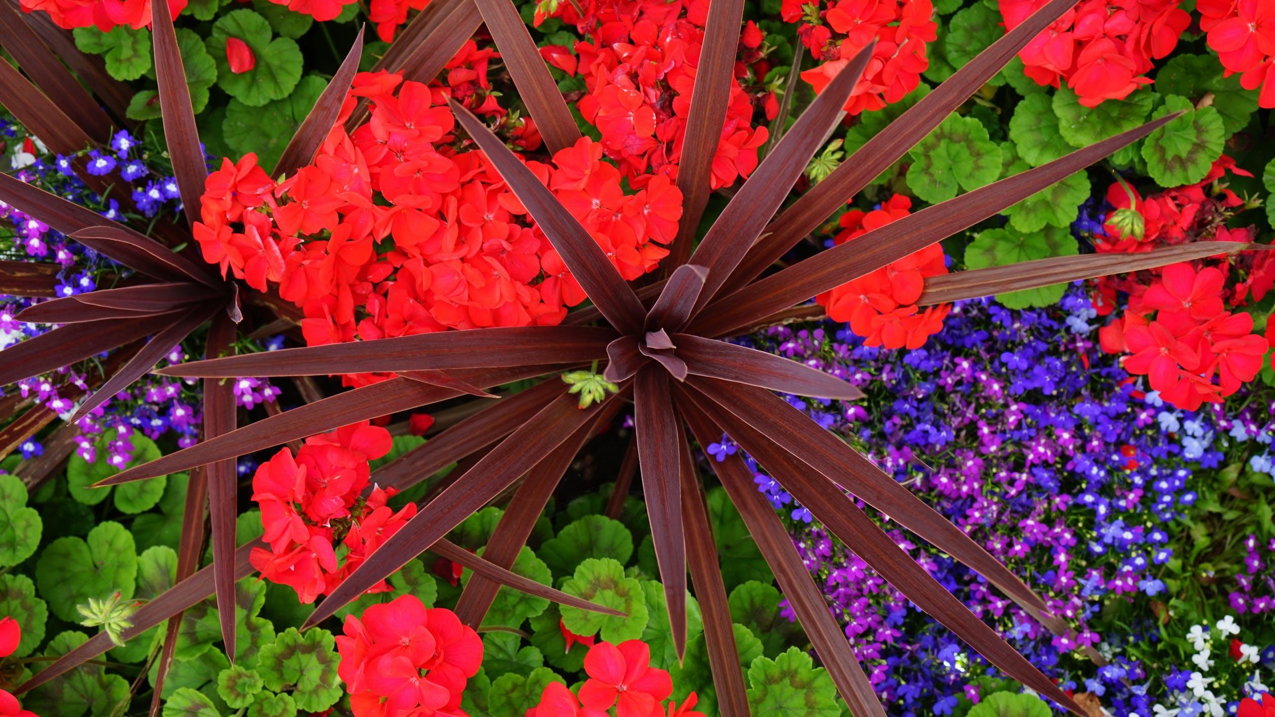thiết kế sân vườn thực vật đỏ