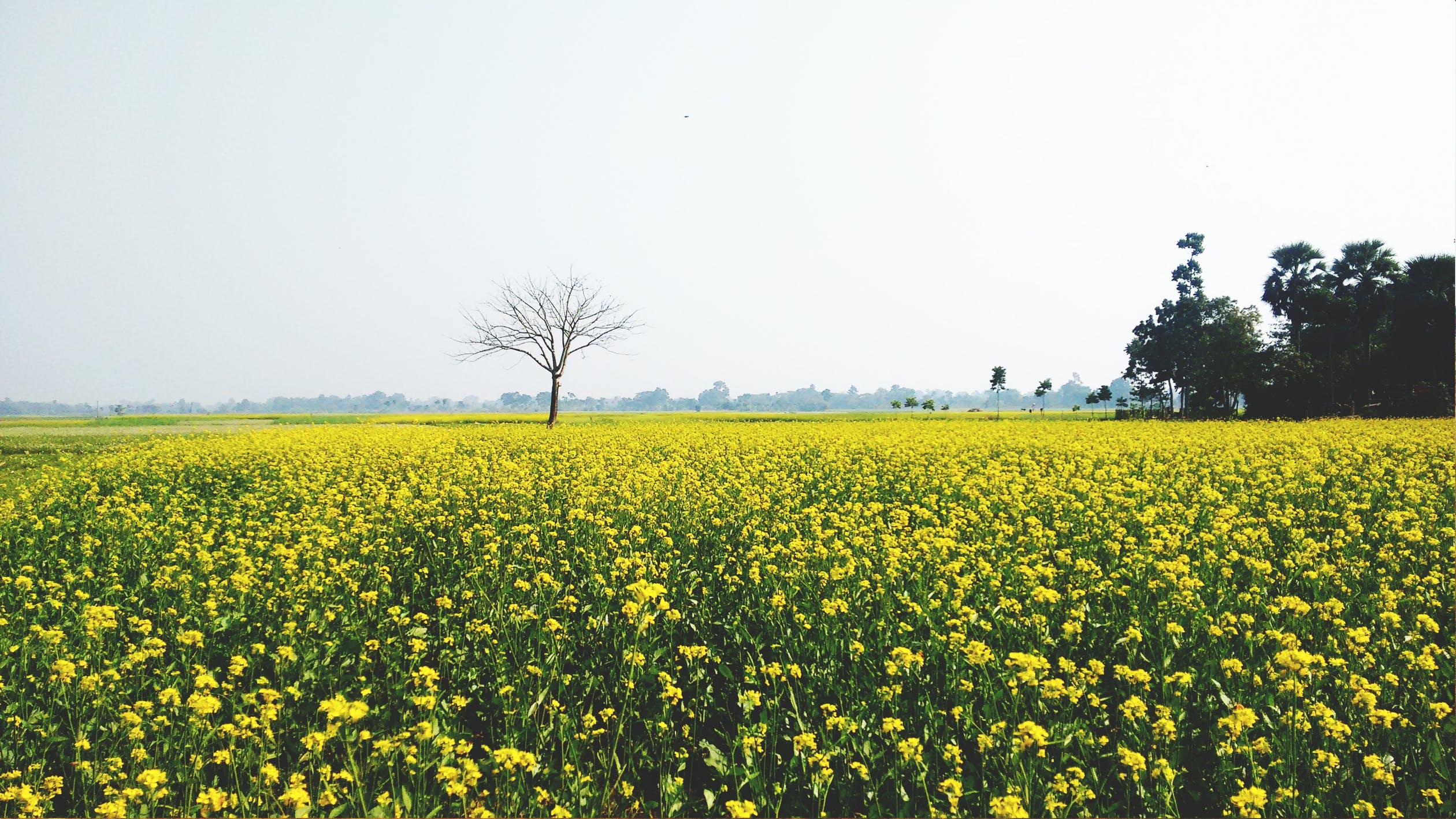 thiết kế vườn hoa màu vàng