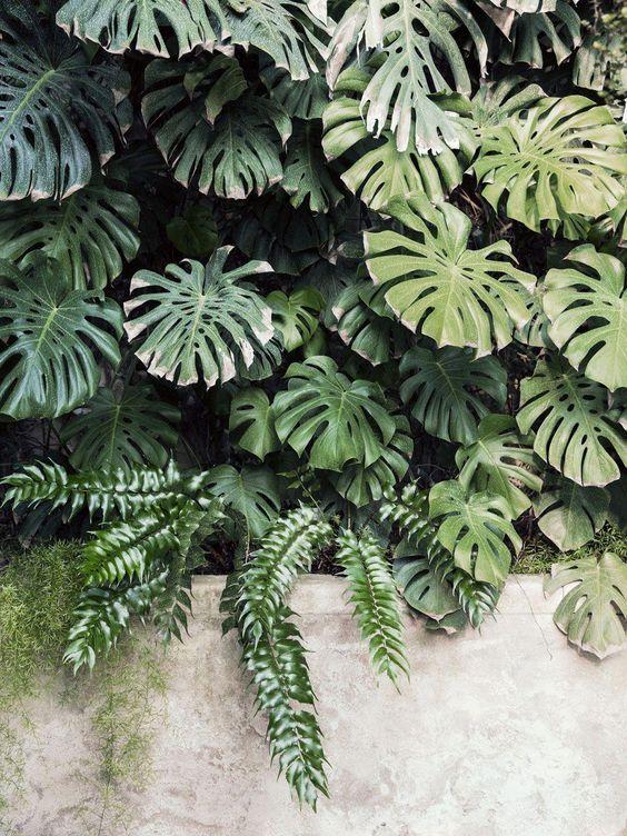 Sân vườn nhiệt đới_Phuoc Landscape