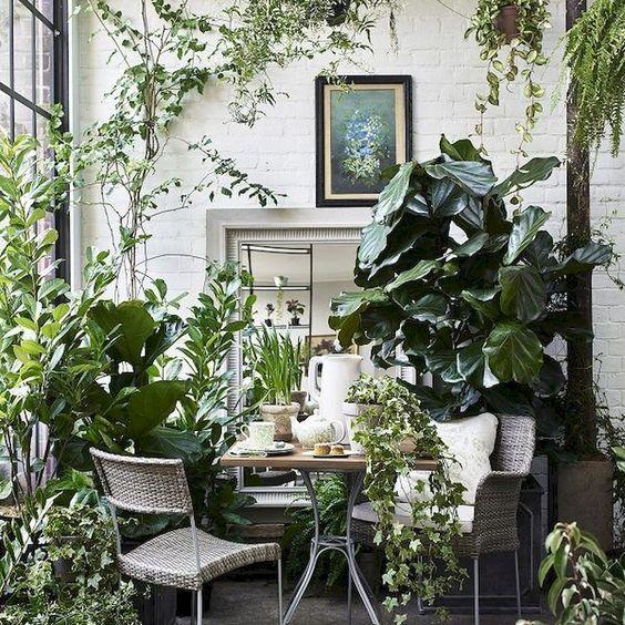 cây xanh nội thất đẹp