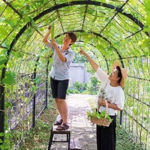 thiết kế thi công vườn rau sạch