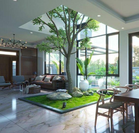 cây xanh nội thất - cây xanh phòng khách