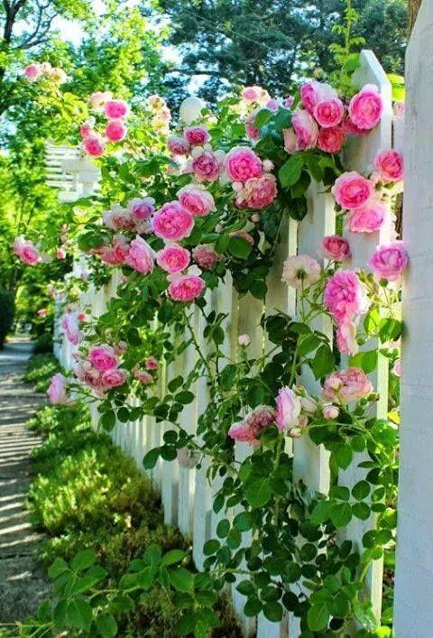 thi công hàng rào hoa leo