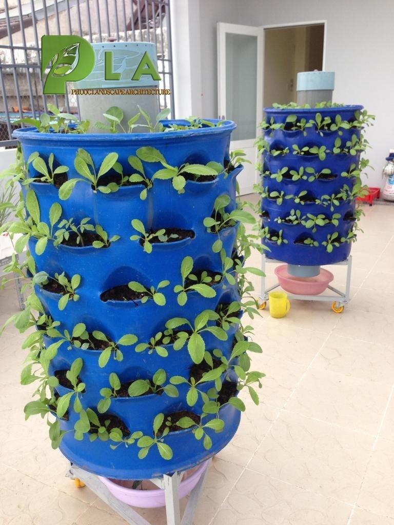 thùng phuy trồng rau