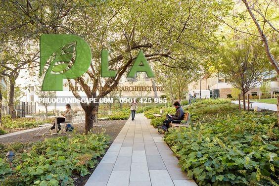 cây xanh bệnh viện